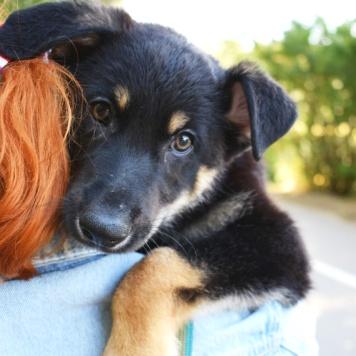 Тео - Собаки в добрые руки