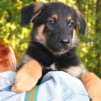 Влада - Собаки в добрые руки