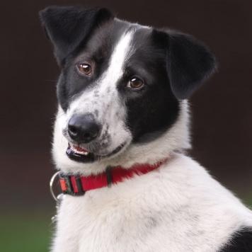Пинта - Собаки в добрые руки