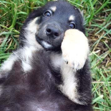 Кэнди - Собаки в добрые руки