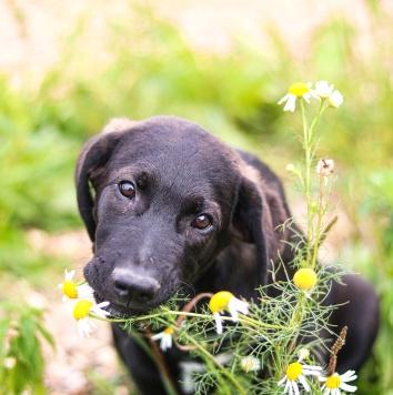Банди - Собаки в добрые руки