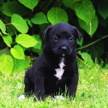 Афоня и другие - Собаки в добрые руки