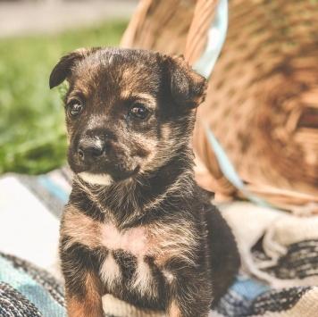 Холли - Собаки в добрые руки