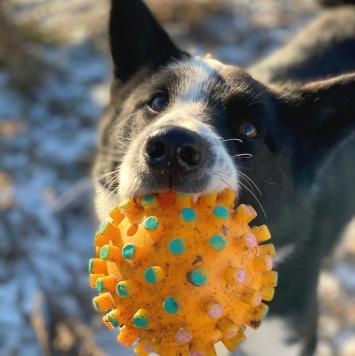 Вольт - Собаки в добрые руки