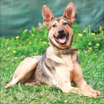 Дюза - Собаки в добрые руки