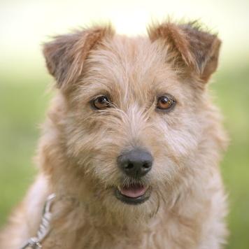 Нэнси - Собаки в добрые руки