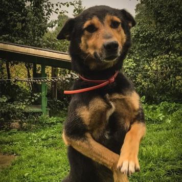 Рекс - Собаки в добрые руки