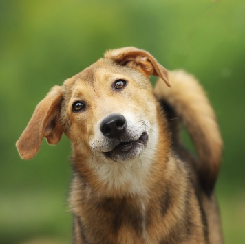 Мерида - Собаки в добрые руки
