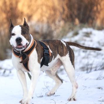 Гусар - Собаки в добрые руки