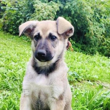 Ярушка (Яра) - Собаки в добрые руки