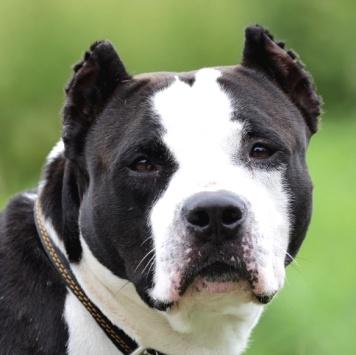 Сударь - Собаки в добрые руки