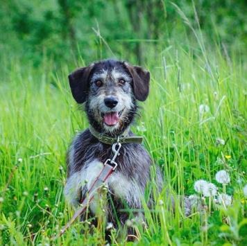 Луша - Собаки в добрые руки