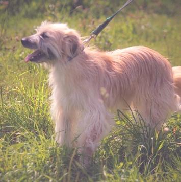 Симона - Собаки в добрые руки