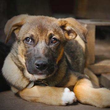Чеддр - Собаки в добрые руки