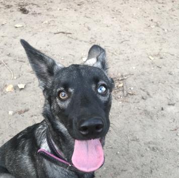 Джойя - Найденные собаки