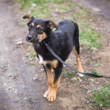 Аленка - Собаки в добрые руки