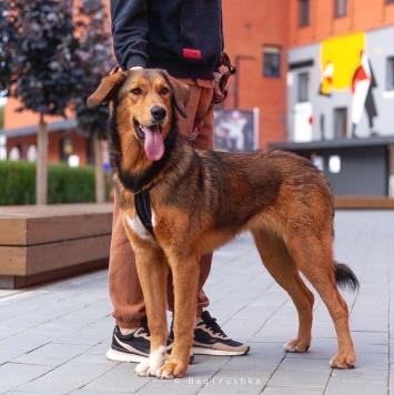 Брианна - Собаки в добрые руки