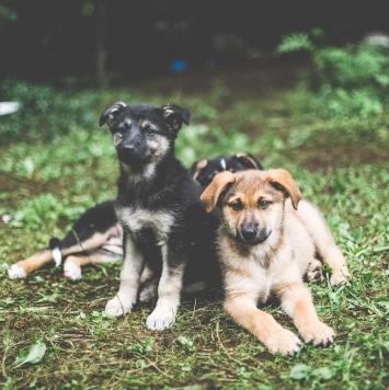 Куба - Собаки в добрые руки