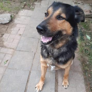 Кайзер - Собаки в добрые руки