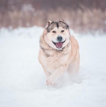 Латиф - Собаки в добрые руки