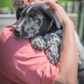 Шишок - Собаки в добрые руки