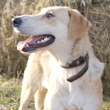 Габби - Собаки в добрые руки