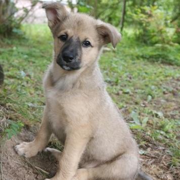 Трюфель - Собаки в добрые руки