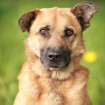 Мухтар - Собаки в добрые руки