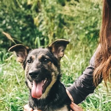 Варя-щенуля - Собаки в добрые руки
