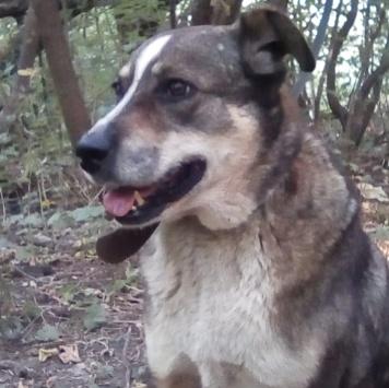 Гвоздик - Собаки в добрые руки