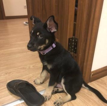 Серджио - Собаки в добрые руки