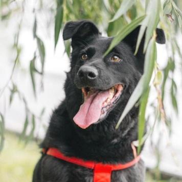 Тори - Собаки в добрые руки
