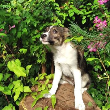 Лола - Собаки в добрые руки