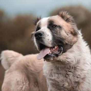 Зиннур - Собаки в добрые руки