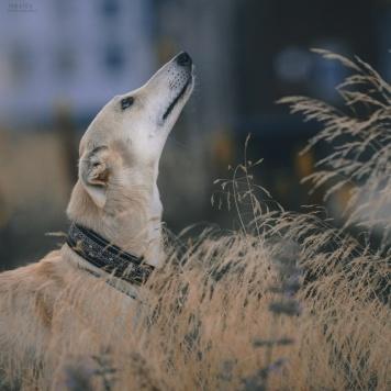 Ассоль - Собаки в добрые руки