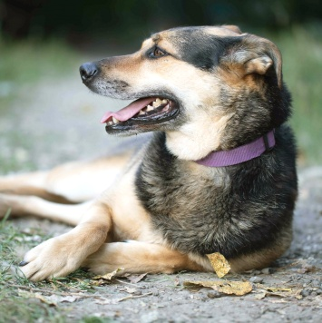 Риди - Собаки в добрые руки