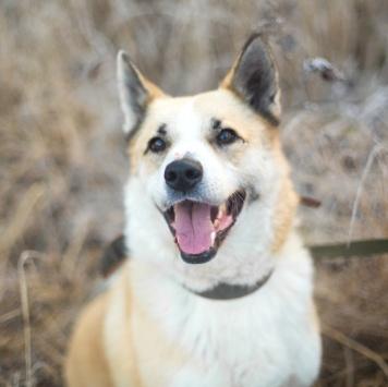 Ирбис - Собаки в добрые руки
