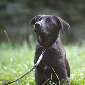 Рик - Собаки в добрые руки