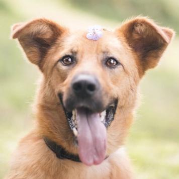 Сунна - Собаки в добрые руки