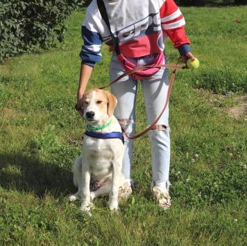Джон Браун - Собаки в добрые руки