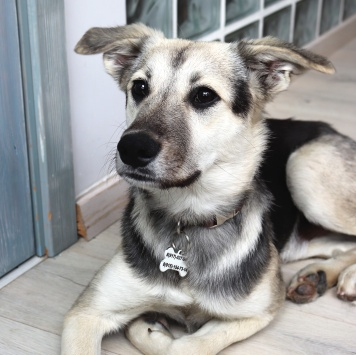 Оззи - Собаки в добрые руки
