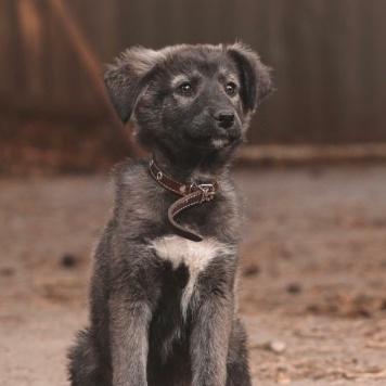 Райли - Собаки в добрые руки