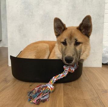 Минато - Собаки в добрые руки