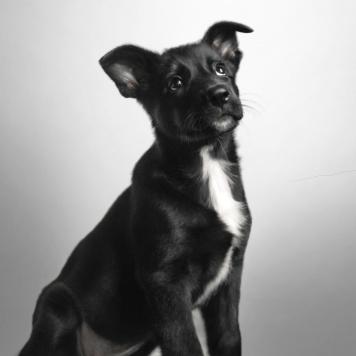 Флёр - Собаки в добрые руки