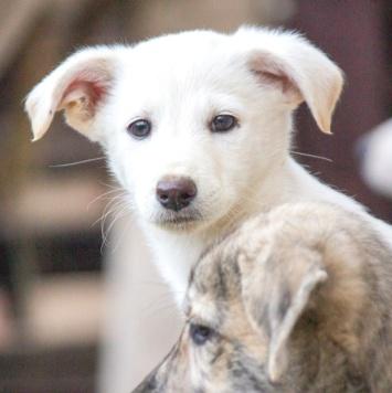 Ося - Собаки в добрые руки