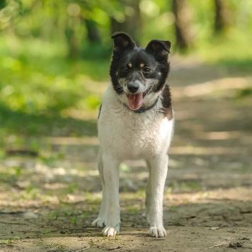 Йоко - Собаки в добрые руки