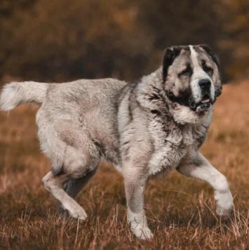 Заки - Собаки в добрые руки