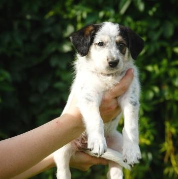 Иза - Собаки в добрые руки