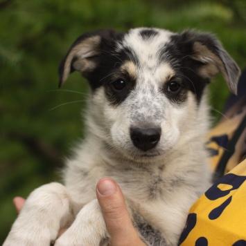 Остин - Собаки в добрые руки