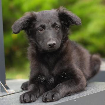 Ромми - Собаки в добрые руки